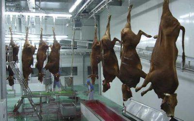 Убойный цех по переработке крупного рогатого скота (КРС)
