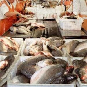 Рыбный-цех-для-переработки-1000-кг.jpg1_